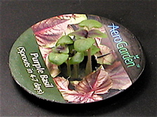 Purple Basil 9 days old