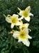 love lilies